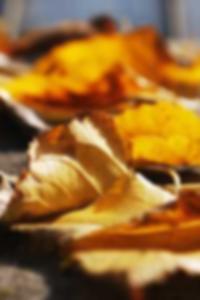 التعارف عن طريق الانترنت مجانا مواقع شيكاغو
