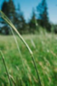صور عارية من دلهي